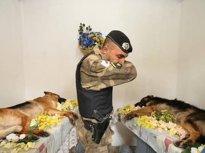Militarypolicedogs tribute